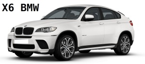 x6-performance-ant